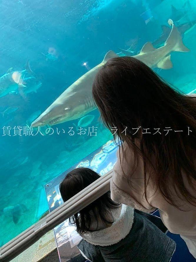 神戸市立須磨海浜水族館(通称スマスイ)本館、波の大水槽